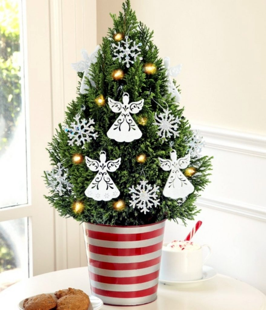 Potted plants decoration idea for Christmas window